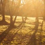 木育って知ってる?木を保育に活かして子どもの豊かな心を育てよう!