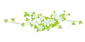 白い花のイラスト